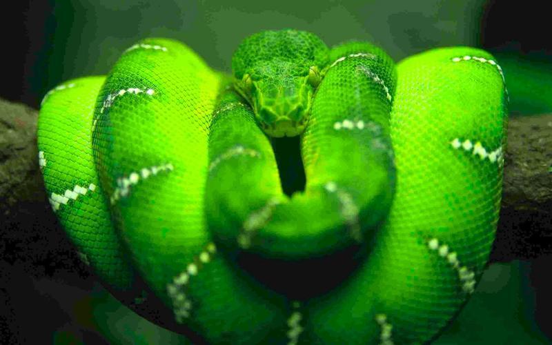 Оказывается змеи могут не принимать пищу и спать в течение 3-х лет подряд.